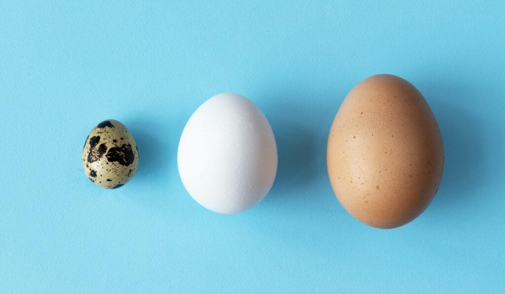 codorniz pollo y huevo de pavo